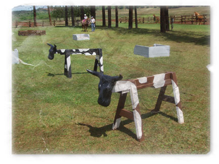 Pony Boy and wooden cows